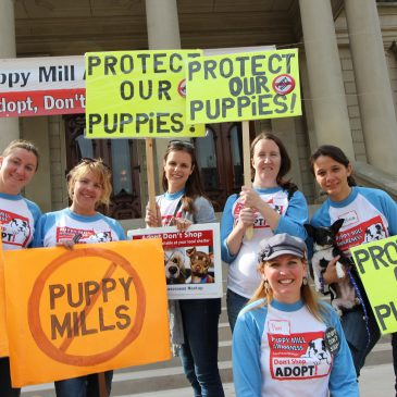 What the USDA Purge of Animal Welfare Records Means to One Michigan Group:  An Interview with Puppy Mill Awareness Founder